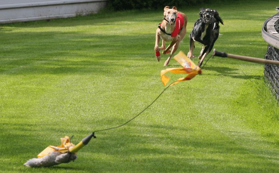 hunderennen wetten